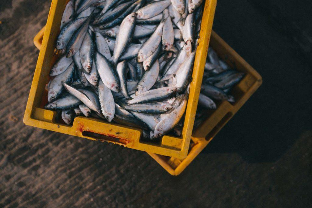 Fish industrie lösung