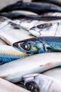 fish industrie