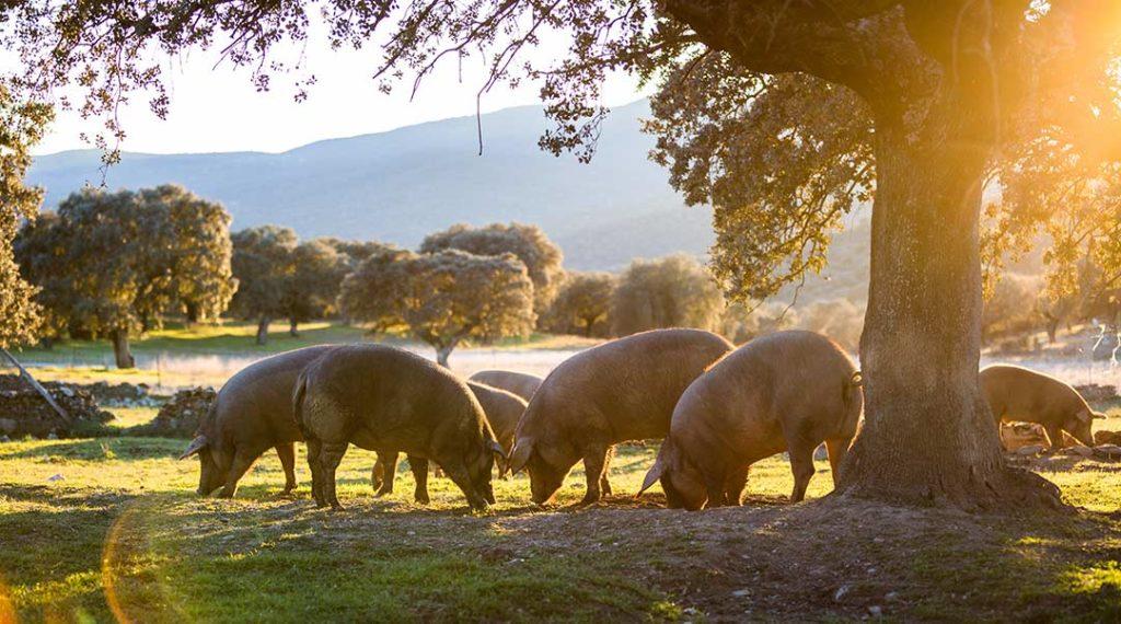 Abwasserbehandlung in der Schweinefleischverarbeitung