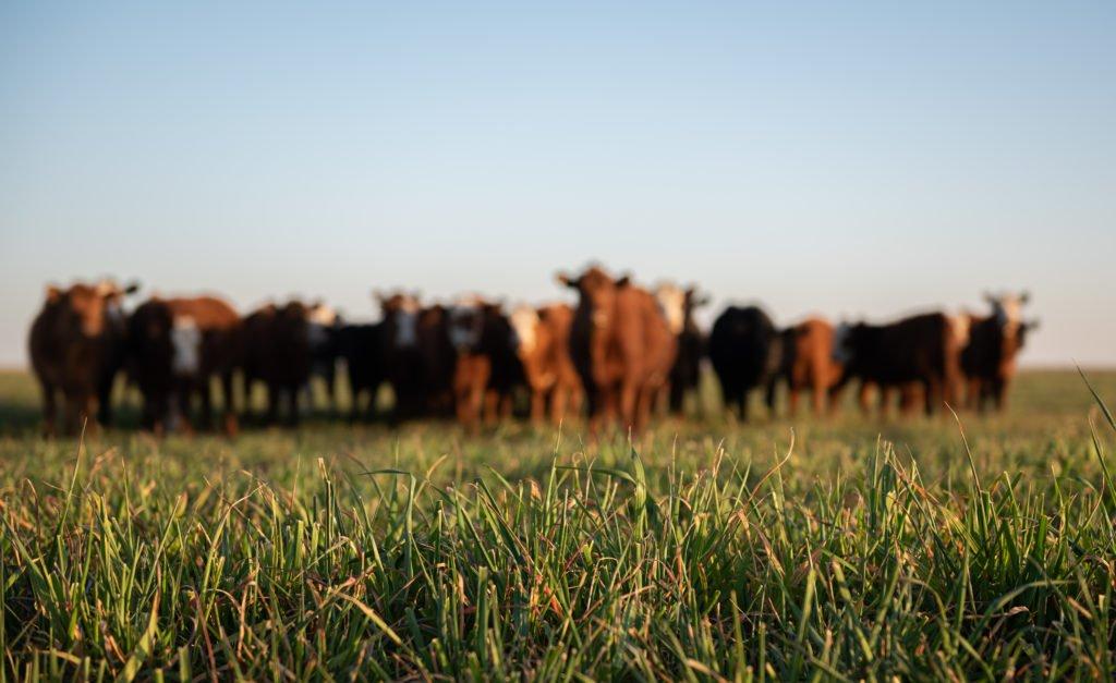 ClearFox® Abwasserreinigung in der Rindfleischverarbeitung